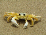 Title: My friend Crab