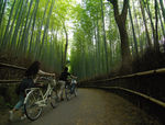 Title: bamboo forest cycling