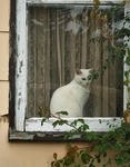 Title: cat watching the worldNikon D-80