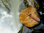 Title: Leaf at the brinkCanon G3