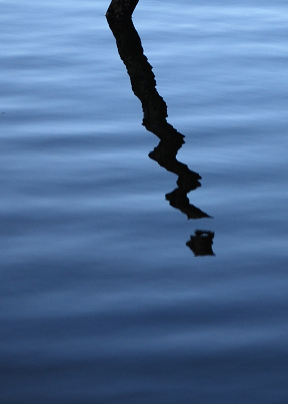 simple reflection