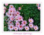 Title: Almost Spring