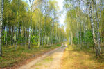 Title: Road in forest