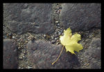 Title: Stone and leaf