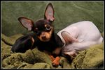 Title: My lovely pets - Kerry & Lilu