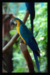Title: Beautiful Macaw