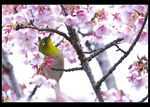 Title: Bird and  blossoms