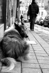 Title: Do you remember Lassie?