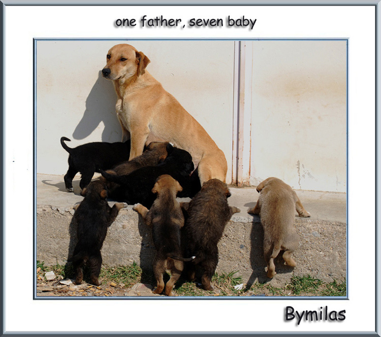 one father, seven baby