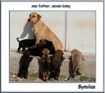 Title: one father, seven baby