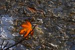 Title: just a leaf