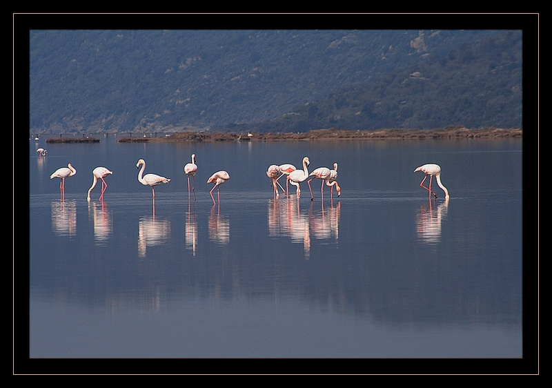 bodrum flamingos:who will save us?TL4
