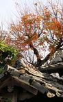 Title: autumn leaves and old roof