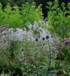 Title: thistles in the forest