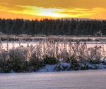 Title: silver snow and golden light