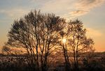 Title: silhouettes of the winter trees