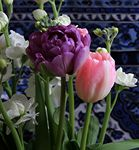 Title: tulip flowers in my room 2Canon EOS 7D