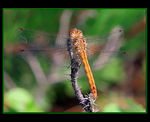 Title: ... Dragonfly ...Canon EOS 350D DIGITAL