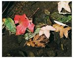 Title: leaves have fallenOlympus OM1