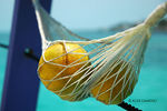 Title: Orange Hammock, Belize