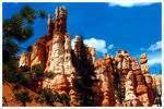 Title: Bryce Canyon (film shot)Olympus 35mm