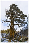 Title: Tree on a Mountain