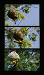 Title: The Nest BuilderCanon  Rebel XTi 400D