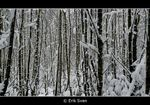 Title: winter TREES barcode