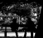 Title: discussion under the big tree