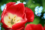 Title: red and white flowerCanon Rebel XT