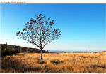 Title: to know what a tree is..Nikon D-80