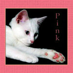Title: Chalenger Pink and Framed Cat 4/4Canon Powershot S1 IS