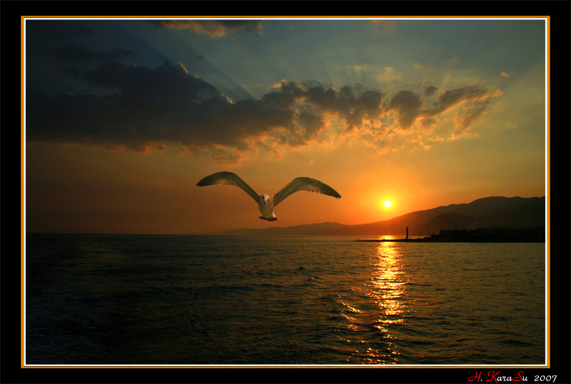 Sunset and seagull