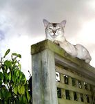 Title: King of the ... Camera: Sony Cyber-shot DSC-P8