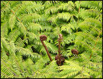 Title: Ferns of NZ - Repetition for Scav HuntCanon EOS 30D