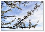 Title: Spring is in the AirPanasonic Lumix DMC TZ3
