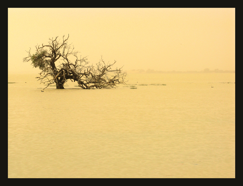 Dust storm with a few ducks