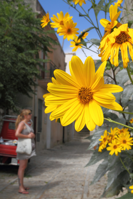 Behind the yellow flower