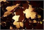 Title: The November leaves