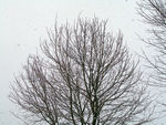 Title: Winter aint over yet !Olympus C-7070 Wide Zoom