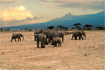 Title: Elephants, Kilamanjaro and sunsetNikon D200