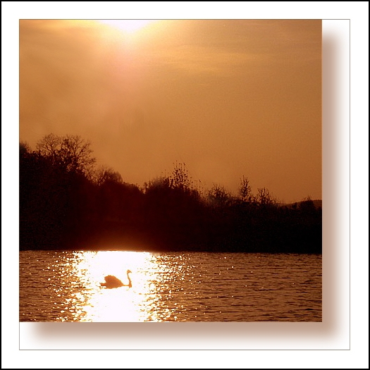 Small square series: Swan