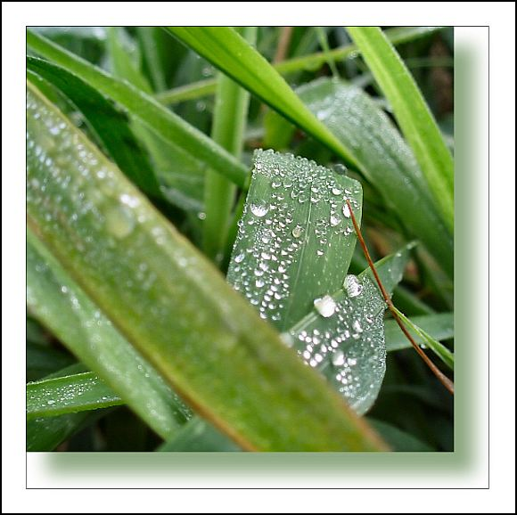 Small square series: Dew