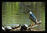 Title: Catch of the dayNikon D200.