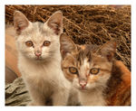 Title: Streetcats