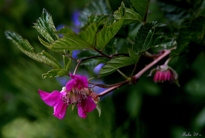 *  The Flowers of Rocky Mountains -18  *