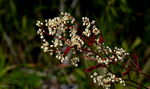 Title: Flowers from Rocky Mountains - 7 !Canon EOS 10 D