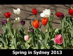 Title: Spring in Sydney 2013Sony Alpha DSLR A300