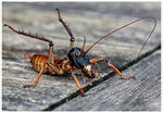 Title: The New Zealand Weta