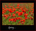 Title: Spring ...